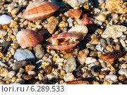 Три ракушки, лежащие на песке и на камнях. Стоковое фото, фотограф eva cuba air / Фотобанк Лори