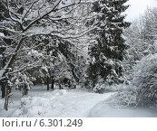 Тропика в зимнем лесу. Стоковое фото, фотограф Голов Евгений Юрьевич / Фотобанк Лори