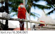 Купить «Close up of two red parrots sitting on perch», видеоролик № 6304061, снято 30 июля 2014 г. (c) Syda Productions / Фотобанк Лори