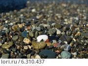 Пляж. Стоковое фото, фотограф Екатерина Романенко / Фотобанк Лори