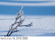 Ветка с инеем на фоне снежного поля. Стоковое фото, фотограф Иван Рочев / Фотобанк Лори