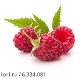 Купить «Sweet raspberry isolated on white background cutout», фото № 6334081, снято 9 сентября 2013 г. (c) Natalja Stotika / Фотобанк Лори