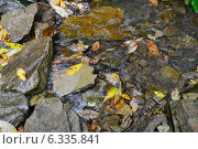 Кристально прозрачный водоём. Стоковое фото, фотограф Шевердина Мария / Фотобанк Лори