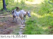 Купить «Коза с козлятами в лесу», эксклюзивное фото № 6355641, снято 25 июля 2014 г. (c) Елена Коромыслова / Фотобанк Лори