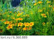 Полевые цветы. Стоковое фото, фотограф Иван Корчагин / Фотобанк Лори