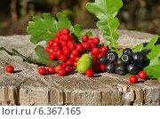 Купить «Дары осени на пне в лесу», эксклюзивное фото № 6367165, снято 5 сентября 2014 г. (c) Елена Коромыслова / Фотобанк Лори
