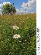 Купить «Летний пейзаж с цветущими ромашками», фото № 6367481, снято 2 июля 2013 г. (c) Татьяна Грин / Фотобанк Лори