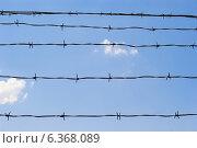 Ограждение из колючей проволоки на фоне голубого неба. Стоковое фото, фотограф VahanN / Фотобанк Лори