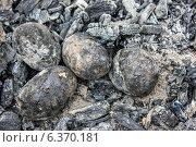 Купить «Печеная в углях картошка», фото № 6370181, снято 7 сентября 2014 г. (c) Наталья Осипова / Фотобанк Лори