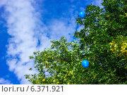 Полет воздушных шаров. Стоковое фото, фотограф Артем Федин / Фотобанк Лори
