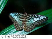 Купить «Close-up of a butterfly at Butterfly Palace, Branson, Taney County, Missouri, USA», фото № 6373229, снято 19 октября 2018 г. (c) Ingram Publishing / Фотобанк Лори