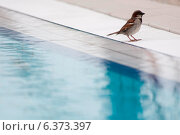 Купить «Sparrow at the side of a swimming pool», фото № 6373397, снято 18 октября 2018 г. (c) Ingram Publishing / Фотобанк Лори