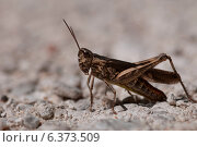 Купить «Macro of a grasshopper», фото № 6373509, снято 31 марта 2020 г. (c) Ingram Publishing / Фотобанк Лори