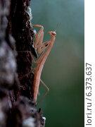 Купить «A artistic shot of a praying mantis», фото № 6373637, снято 11 ноября 2019 г. (c) Ingram Publishing / Фотобанк Лори
