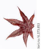 Купить «Красный осенний лист», фото № 6373853, снято 5 сентября 2014 г. (c) Ekaterina Andreeva / Фотобанк Лори