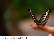 Купить «Butterfly perching on a person's finger at Butterfly Palace, Branson, Taney County, Missouri, USA», фото № 6374121, снято 13 ноября 2018 г. (c) Ingram Publishing / Фотобанк Лори