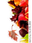 Купить «Осенние листья на белом фоне», фото № 6378393, снято 12 ноября 2013 г. (c) Наталия Кленова / Фотобанк Лори
