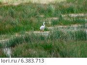 Купить «A egret in a field», фото № 6383713, снято 26 марта 2019 г. (c) Ingram Publishing / Фотобанк Лори