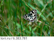 Купить «A butterfly», фото № 6383781, снято 16 июля 2019 г. (c) Ingram Publishing / Фотобанк Лори