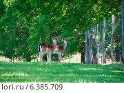 Fallow deer by a fense. Стоковое фото, агентство Ingram Publishing / Фотобанк Лори