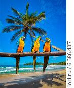 Сине-жёлтые попугаи Ара. Стоковое фото, фотограф Дмитрий Рухленко / Фотобанк Лори