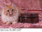 Кошка и шкатулка. Стоковое фото, фотограф Анна Дорофеенко / Фотобанк Лори