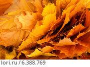 Купить «Осенние кленовые листья, фон», фото № 6388769, снято 27 октября 2011 г. (c) Lora Liu / Фотобанк Лори