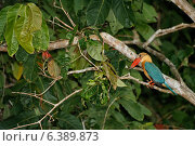 Купить «Stork billed kingfisher waiting for prey», фото № 6389873, снято 20 апреля 2019 г. (c) Ingram Publishing / Фотобанк Лори