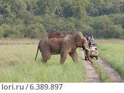 Купить «Adult bull in musth crossing road while tourists watch», фото № 6389897, снято 19 октября 2018 г. (c) Ingram Publishing / Фотобанк Лори