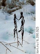 Двое. Стоковое фото, фотограф Анна Бондарева / Фотобанк Лори