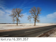 Купить «Два дерева у дороги», фото № 6391357, снято 2 февраля 2014 г. (c) Татьяна Грин / Фотобанк Лори