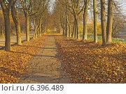 Осенняя дорога (2013 год). Стоковое фото, фотограф Валентина Троль / Фотобанк Лори