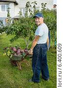 Купить «Огородник перевозит в тачке урожай свеклы», фото № 6400609, снято 12 сентября 2014 г. (c) Александр Романов / Фотобанк Лори