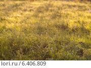 Поле на закате дня. Стоковое фото, фотограф Владимир Черкасов / Фотобанк Лори