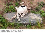 Купить «Череп и кости на камне», фото № 6407637, снято 4 сентября 2011 г. (c) Илья Ладнев / Фотобанк Лори