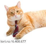 Рыжий кот в красном галстуке. Стоковое фото, фотограф Okssi / Фотобанк Лори