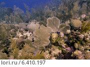 Купить «Underwater view of coral reef, Utila, Bay Islands, Honduras», фото № 6410197, снято 26 декабря 2012 г. (c) Ingram Publishing / Фотобанк Лори