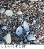 Купить «High angle view of pebbles and shells, Hecla Grindstone Provincial Park, Manitoba, Canada», фото № 6412881, снято 27 июня 2013 г. (c) Ingram Publishing / Фотобанк Лори