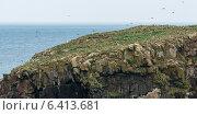 Купить «Flock of Atlantic Puffin birds at coast, Little Catalina, North Bird Island, Bonavista Peninsula, Newfoundland And Labrador, Canada», фото № 6413681, снято 23 августа 2013 г. (c) Ingram Publishing / Фотобанк Лори