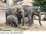 Купить «Семья слонов», фото № 6418037, снято 9 сентября 2014 г. (c) Наталья Волкова / Фотобанк Лори