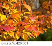 Купить «Осенние листья, фон», фото № 6420001, снято 12 октября 2013 г. (c) Наталья Двухимённая / Фотобанк Лори