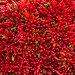 Lots of red peppers arranged at the market, фото № 6420033, снято 20 ноября 2013 г. (c) Elnur / Фотобанк Лори