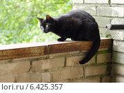 Кот грустит на ограждении балкона. Стоковое фото, фотограф Мария Бурыхина / Фотобанк Лори