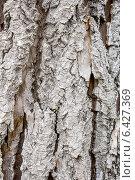 Купить «Кора старой осины. Фон», фото № 6427369, снято 21 сентября 2014 г. (c) Наталья Осипова / Фотобанк Лори