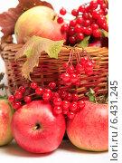 Купить «Яблоки в корзине и ягоды красной калины», эксклюзивное фото № 6431245, снято 23 сентября 2014 г. (c) Яна Королёва / Фотобанк Лори