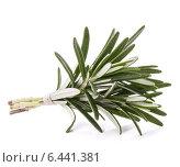 rosemary herb spice leaves isolated on white background cutout. Стоковое фото, фотограф Natalja Stotika / Фотобанк Лори