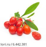 Купить «Goji, ветка с красными ягодами на белом фоне», фото № 6442381, снято 26 ноября 2013 г. (c) Валентина Разумова / Фотобанк Лори