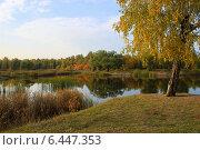Осенний пейзаж - золотая береза у пруда в парке. Стоковое фото, фотограф Светлана Ильева (Иванова) / Фотобанк Лори