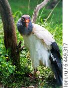 Купить «Экзотическая птица - королевский гриф», фото № 6449317, снято 9 сентября 2014 г. (c) Наталья Волкова / Фотобанк Лори