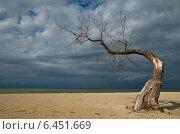 Одинокое дерево на берегу. Стоковое фото, фотограф Roman.melnikeysk / Фотобанк Лори